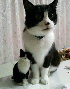mel-cat:       Mini-Me