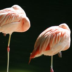 Flamigo's #flamingo #zoo #lindabaartkunst