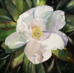 WHITE MAGNOLIA II original watercolor on paper 22 x 30 by Colleen Sanchez This is the second magnolia of the pair I had planned. I work . Silk Painting, Watercolour Painting, Watercolor Flowers, Watercolors, Magnolia Paint, Seascape Paintings, Floral Paintings, Botanical Art, Flower Art
