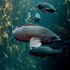 "Classroom Activity: ""Decode a Fish. Next Generation Science Standards, Monterey Bay Aquarium, Curriculum Planning, School Notebooks, Visual Aids, Home Schooling, Classroom Activities, Ocean, Fish"