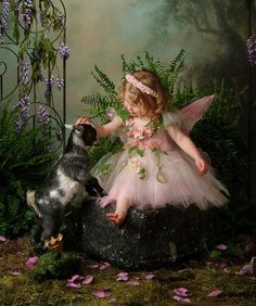 # FAERIE PETTING BABY GOAT