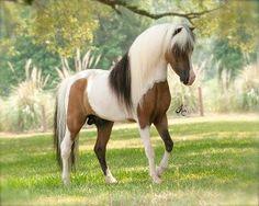 История коня