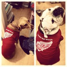 Thanks to Twitter follower @hansonhunter for sharing his pups' excitement for the @Detroit Red Wings tonight. #hockeypets