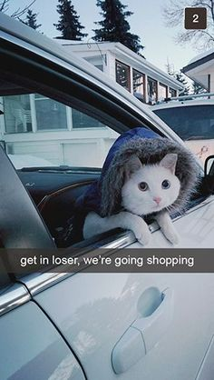 Get in Loser We're Going Shopping! -snapchats from your cat! http://www.buzzfeed.com/jarrylee/snapcats