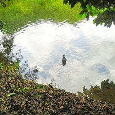 #laguna #ElTabacal #LaVega #Cundinamarca #Colombia #Kolumbien #lake #See #vscocam