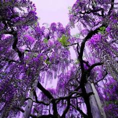 Waterfall flowers