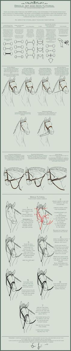 I shall look at this later. I've been wanting to improve my OTTBs mouths and make them like butter. It's a hard task!