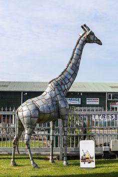 14ft giraffe sculpture from Pangea