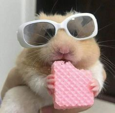 Delicious Animal Blend For A Finer Weekend (Memes And Pics) - I Can Has Cheezburger? Super Cute Animals, Cute Little Animals, Cute Funny Animals, Cute Animal Photos, Funny Animal Pictures, Cute Pictures, Cute Profile Pictures, Cute Photos, Image Swag
