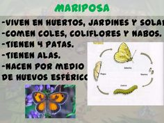 Los insectos para infantil Homeschooling, Ideas, Insect Activities, Sweet 16 Sleepover, Insects, Kids, Thoughts, Homeschool
