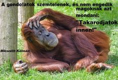 """""""A gondolatok szemtelenek, és nem engedik magoknak azt mondani: """"Takarodjatok innen!"""" Mikszáth Kálmán Make More Money, Orangutans, Parks, Animals, Descendants, Freedom"""