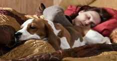 Scientists have foun Scientists have found that women have better sleep quality with their pets beside them. Antidepresivo Natural, Dog Sleeping In Bed, Sleep Medicine, Animal Help, Sleep Quality, Therapy Dogs, Pet Treats, Go To Sleep, Dog Owners