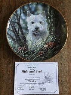 """Gold Trimmed West Highland White Terrier Collectors Plate """"Hide And Seek"""" West Highland White, White Terrier, Westies, Terriers, The Collector, Plates, Gold, Animals, Ebay"""