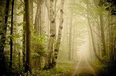 迷失在夢幻般的森林中 – Joy St.claire 攝影作品