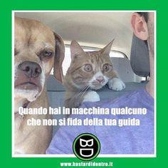 Quando non si #fidano della tua #guida. #bastardidentro #cane #gatto www.bastardidentro.it