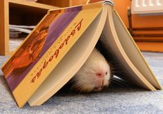 Even when I'm buried deep in a book, I know reading is fundamental.