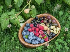 Spring has sprung and 'tis the season to be berry! If you have a client who wants to dabble in the world of edible landscaping but doesn't want to go all out, why not suggest some berries as a star…