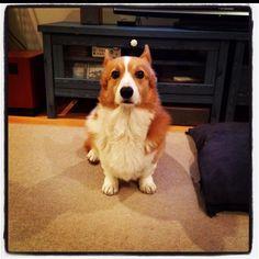 dog version of kai and kelso!