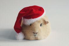 Santa booboo by lieveheersbeestje.deviantart.com on @deviantART