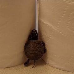 Turtle fail