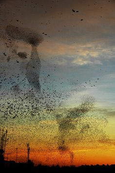 Murmuration of Starlings by Dasar, Italy.