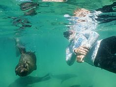 Seal Snorkelling. Plettenberg Bay Adventures | Thing to do in Plettenberg Bay - Dirty Boots