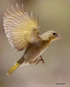Beautiful bird from Oman