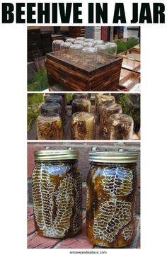 DIY Mason Jar Bee Hives - wow, need to try this. I need to make a bee board Pot Mason Diy, Mason Jar Crafts, Uses For Mason Jars, Mason Jar Garden, Diy Mason Jar Lights, Ball Mason Jars, Honey Bee Hives, Honey Bees, Honey Bee Box