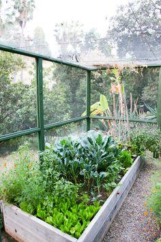 Lauri Krantz: Gardening Consultant + Founder of Edible Gardens LA