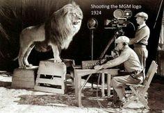 Grabando el león de la MGM