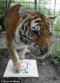 Painting is part of the cats enrichment program, which keep them mentally stimulated