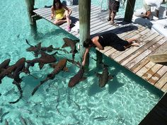 When I Become Rich... I will go to an exotic place and do crazy things... Like pet sharks?!