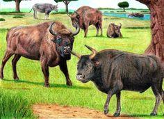 Prehistoric Safari : Pleistocene Western Europe by Jagroar.deviantart.com on @deviantART