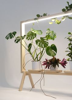 etagere porte plante eclairage led integre #green #interiors #plants