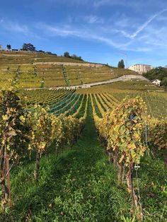 The Lavaux UNESCO World Heritage Vineyards in Vaud. A walk thrugh one of the most scenic areas of Switzerland with the terraced vineyards. Places To Travel, Places To Visit, Cultural Significance, Walking Routes, Lake Geneva, Going On Holiday, World Heritage Sites, See Photo, Switzerland