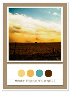 Color Card 013: Marigold, Citrus Skin, Pool, Chocolate   The Inspired Bride