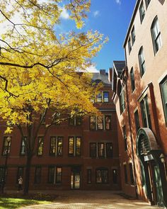 More yellow #Boston #bostonusa #bostondotcom #bostoniphonephotos #beauty #busm #bostonuniversity #iphoneonly #iphonephoto #architecture #history #southend #unsung_masters #freedomthinkers #trees #leaves #foliage #yellow #fall #autumn #thisisfall #theamericancollective #instagood #icu_usa #igersboston #igboston #visitma #visitboston #igersnewengland #igersmassachusetts by lo371
