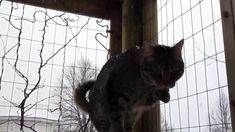 A catio for all seasons. This is what the Chirpy Cats get up to when it's snowing in their catio.