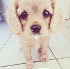 Sad Puppy Face cute animals cats adorable dog puppy pets funny animals