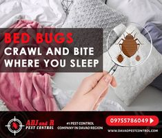 Best Pest Control, Pest Control Services, Bed Bug Bites, Davao, Bed Bugs, Telephone, Philippines, No Worries, Let It Be