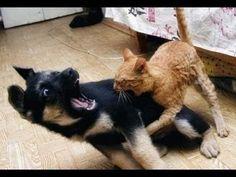 Gato vs Perro GRACIOSO - YouTube