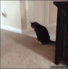 I love cat gifs and dog gifs. Funny Cats, Cute Cats, all the time.Big animals gif lover too. Funny Animal Videos, Funny Animals, Cute Animals, Cute Cats, Funny Cats, Funny Humor, Funny Shit, Cats Tumblr, Cats For Sale