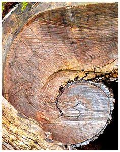arbre mort bois flott et souche d 39 arbre pour d corer le jardin souche bois bois mort. Black Bedroom Furniture Sets. Home Design Ideas