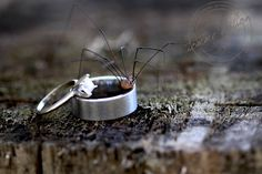 spider ring. ©Tomme Hilton Gallery