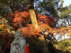 紅葉  autumn leaves