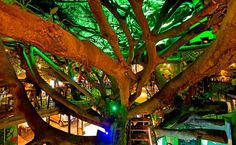 Tree House Restaurant and Cafe is located Monteverde, Costa Rica. It is a nice and unique restaurant built in the branches of an old huge ficus tree. This restaurant has been developed in 2004 and operated continuously. Two Costa Ricans are the owners of this restaurant and almost 30 people work in this restaurant. All the staff work hard … RePinned by : www.powercouplelife.com