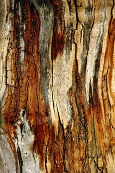 "Check out my art piece ""Bark Abstract"" on crated.com #bark #abstract #nature #art #photography #wood"