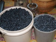 Delicious Lower North Shore blueberries picked at Chevery, Quebec