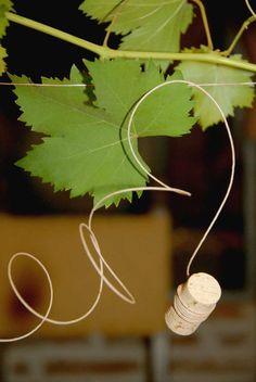 Festa Compleanno 50 Anni Tema Vino: un filare sopra il tavolo