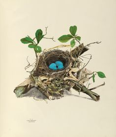 America's Other Audubon: Illustrations of the Nests and Eggs of Birds of Ohio. Illustrations by Genevieve and Virginia Jones